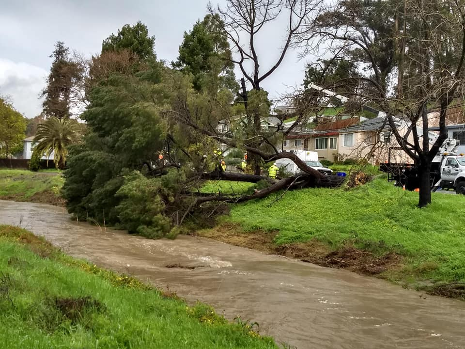 Falling tree along Pinole Valley Rd