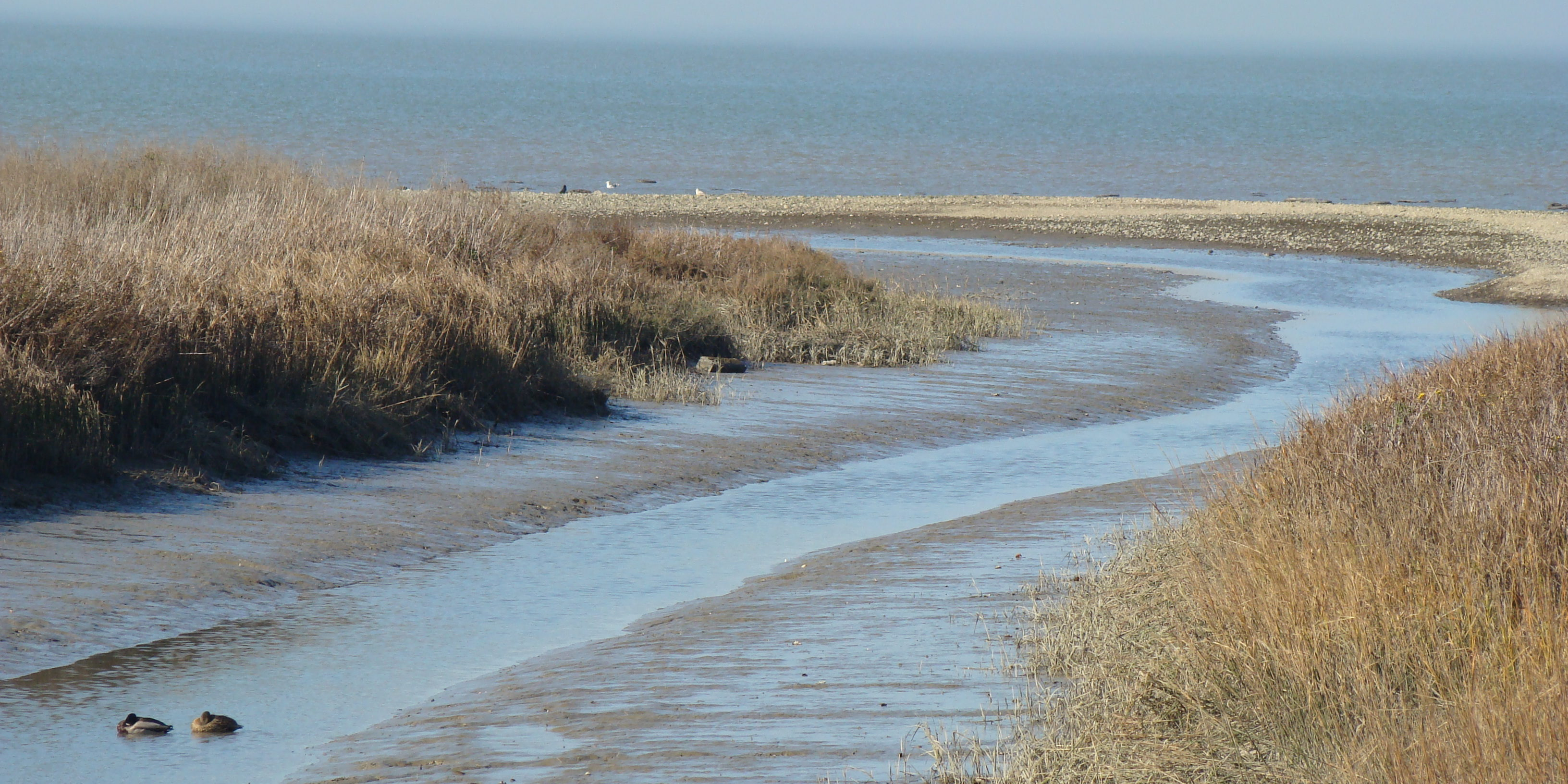 Mouth of Pinole Creek